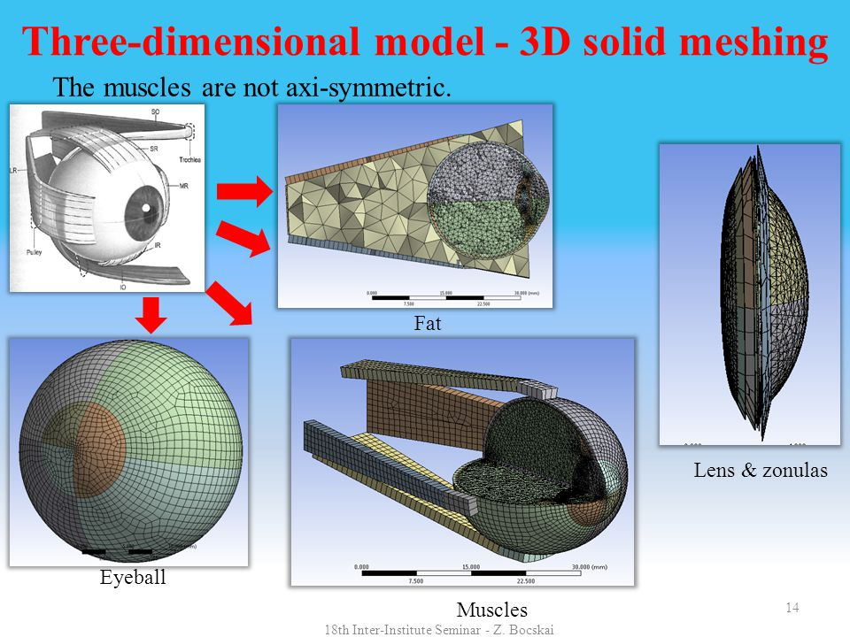 14 Three-dimensional model - 3D solid meshing The muscles are not axi-symmetric. Fat Eyeball Lens & zonulas Muscles 18th Inter-Institute Seminar - Z.
