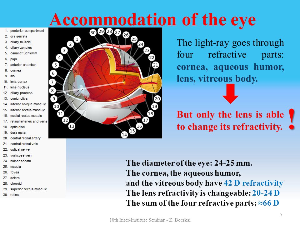 5 Accommodation of the eye The diameter of the eye: 24-25 mm. The cornea, the aqueous humor, and the vitreous body have 42 D refractivity The lens ref