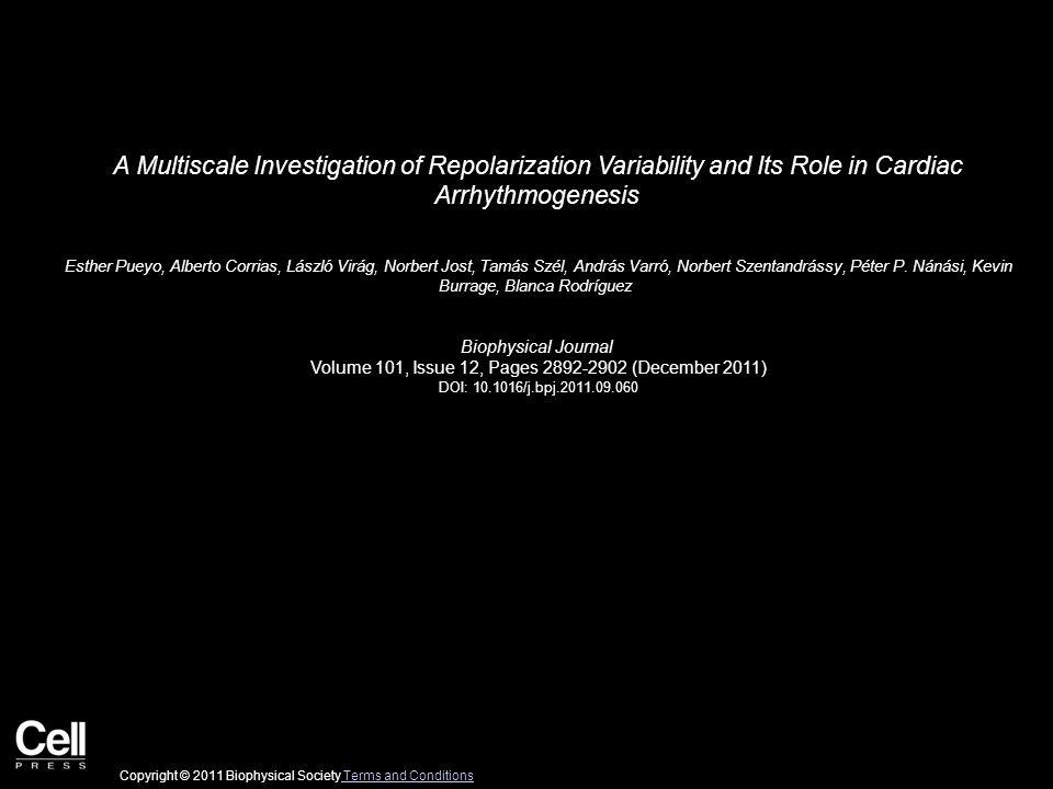 A Multiscale Investigation of Repolarization Variability and Its Role in Cardiac Arrhythmogenesis Esther Pueyo, Alberto Corrias, László Virág, Norbert Jost, Tamás Szél, András Varró, Norbert Szentandrássy, Péter P.