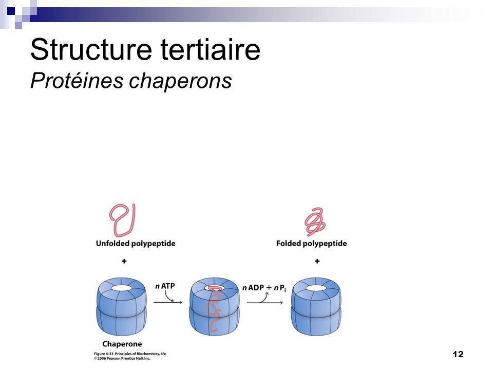 CHMI 2227 - E.R. Gauthier, Ph.D.12 Structure tertiaire Protéines chaperons