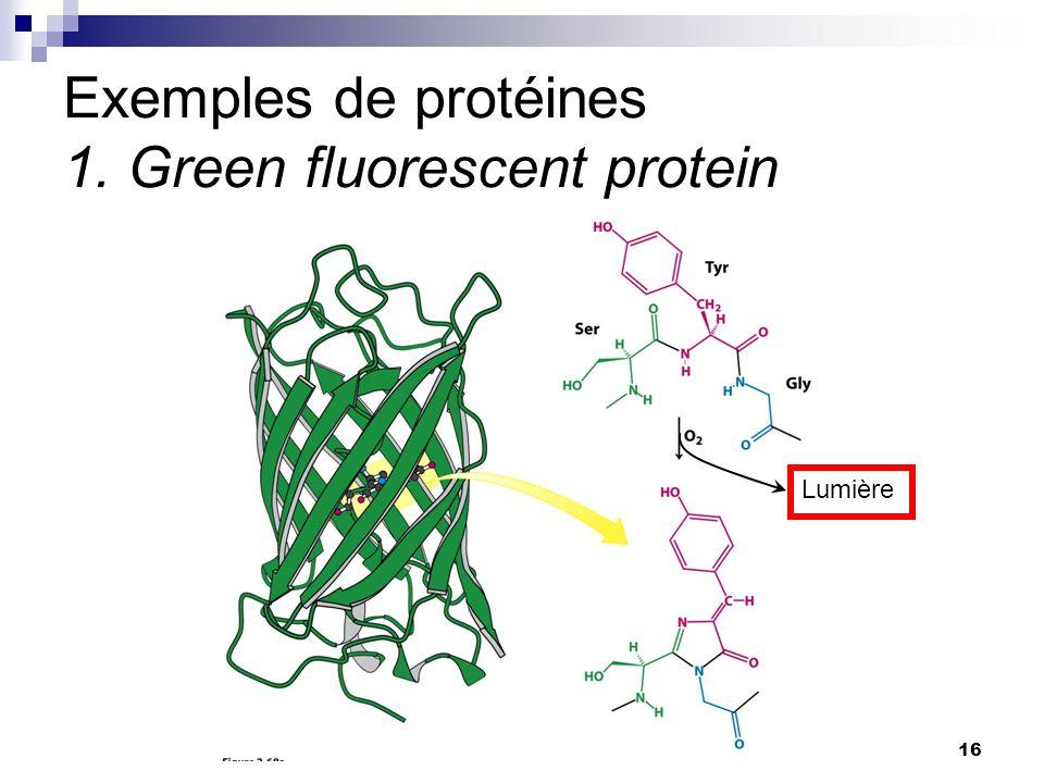 CHMI 2227 - E.R. Gauthier, Ph.D.16 Exemples de protéines 1. Green fluorescent protein Lumière