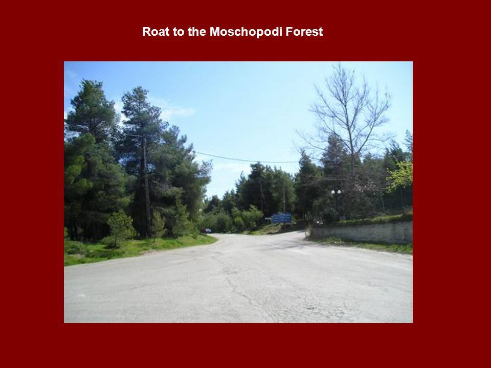 Roat to the Moschopodi Forest