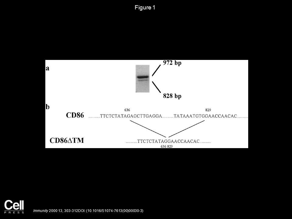 Figure 1 Immunity 2000 13, 303-312DOI: (10.1016/S1074-7613(00)00030-3)