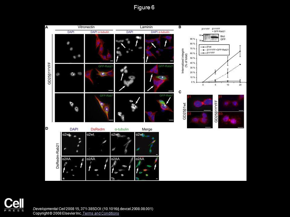 Figure 6 Developmental Cell 2008 15, 371-385DOI: (10.1016/j.devcel.2008.08.001) Copyright © 2008 Elsevier Inc.
