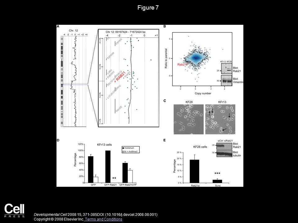 Figure 7 Developmental Cell 2008 15, 371-385DOI: (10.1016/j.devcel.2008.08.001) Copyright © 2008 Elsevier Inc.