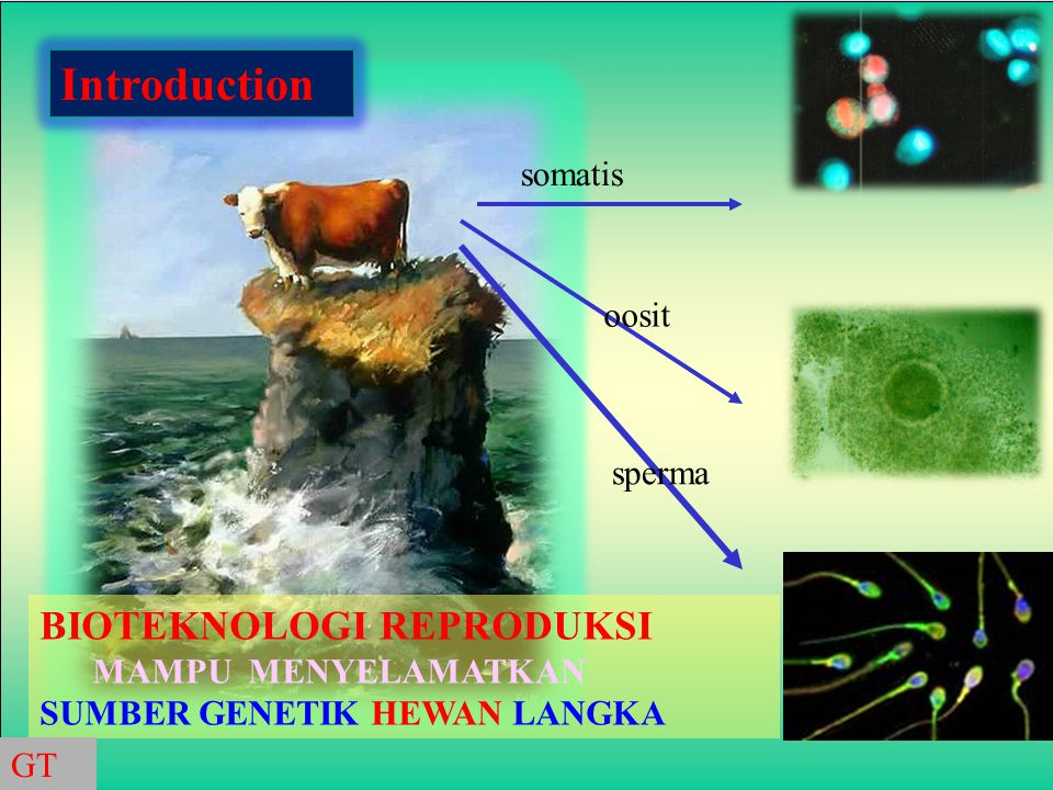 Genetic Consideration and Constraints of Gen Manipulation???: No.PersilanganFertilitasKeunggulan F1 JantanBetina 1.BantengX Zebu-+Laju pertumbuhan 2.Keledai Xkuda-+Kerja + ketahanan 3.Sapi x Yak--BB/Power/Susu 4.Bos taurusxB.