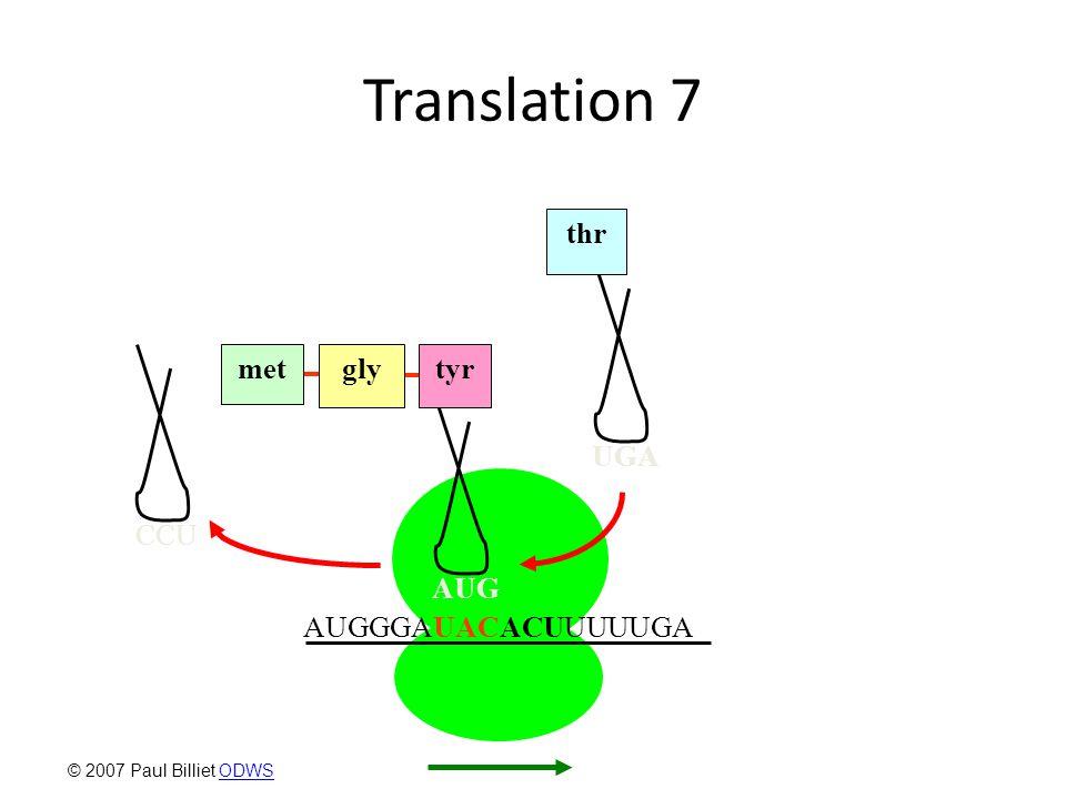 Translation 7 UGA thr CCU AUGGGAUACACUUUUUGA AUG glymettyr © 2007 Paul Billiet ODWSODWS
