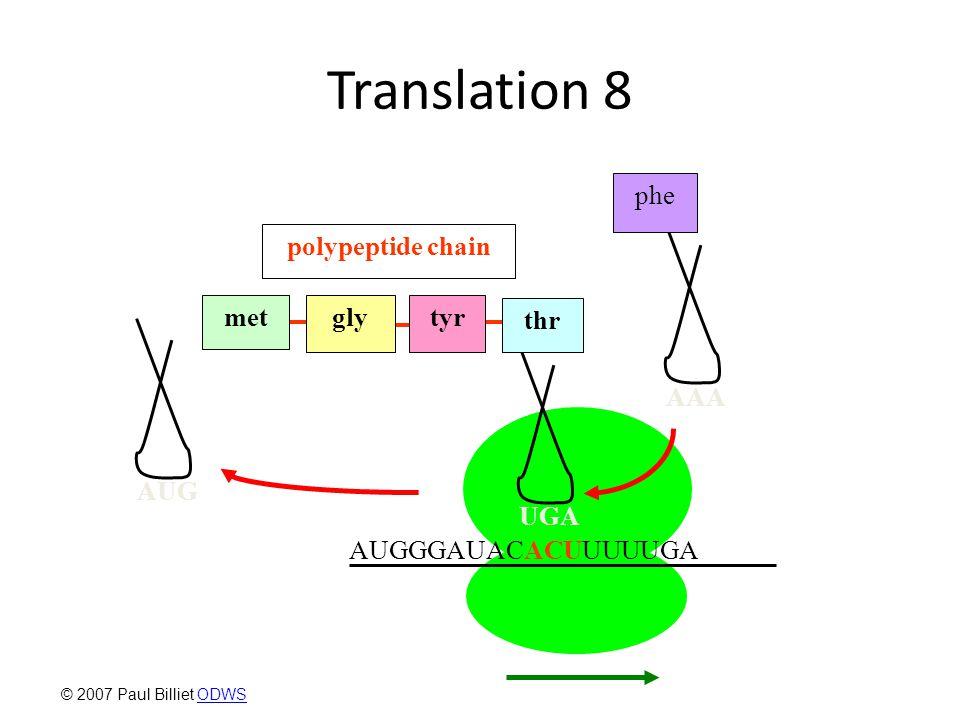 Translation 8 AAA phe AUGGGAUACACUUUUUGA AUG UGA glymettyr thr polypeptide chain © 2007 Paul Billiet ODWSODWS
