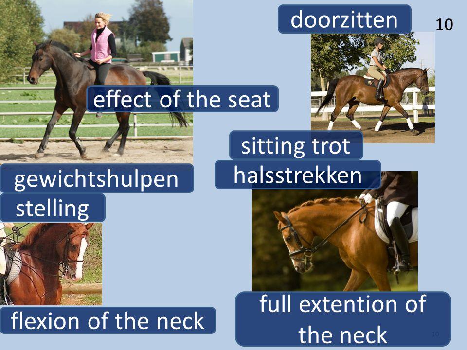 10 gewichtshulpen effect of the seat stelling flexion of the neck halsstrekken full extention of the neck doorzitten sitting trot