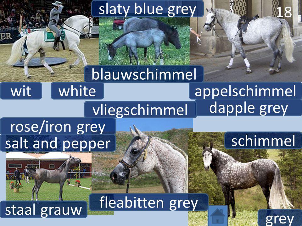 18 dapple grey appelschimmelwhitewit vliegschimmel fleabitten grey rose/iron grey staal grauw grey schimmel salt and pepper 18 slaty blue grey blauwschimmel