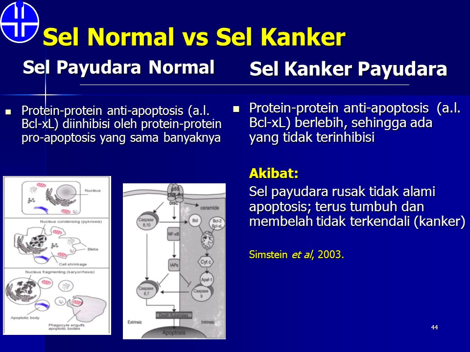 Sel Normal vs Sel Kanker Sel Payudara Normal Protein-protein anti-apoptosis (a.l. Bcl-xL) diinhibisi oleh protein-protein pro-apoptosis yang sama bany