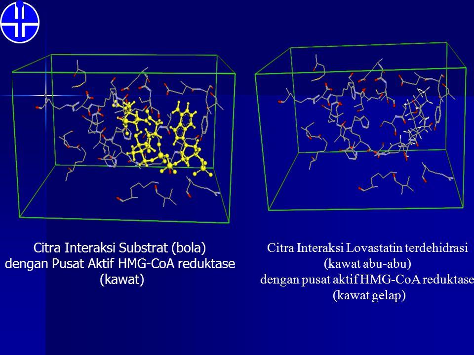 Citra Interaksi Substrat (bola) dengan Pusat Aktif HMG-CoA reduktase (kawat) Citra Interaksi Lovastatin terdehidrasi (kawat abu-abu) dengan pusat akti