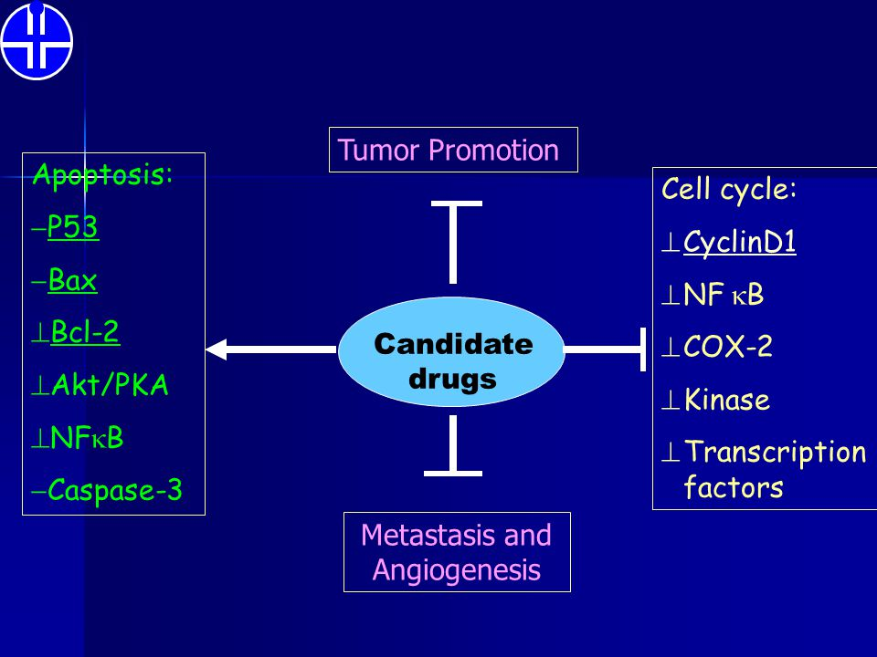 Candidate drugs Apoptosis:  P53  Bax  Bcl-2  Akt/PKA  NF  B  Caspase-3 Cell cycle:  CyclinD1  NF  B  COX-2  Kinase  Transcription factor