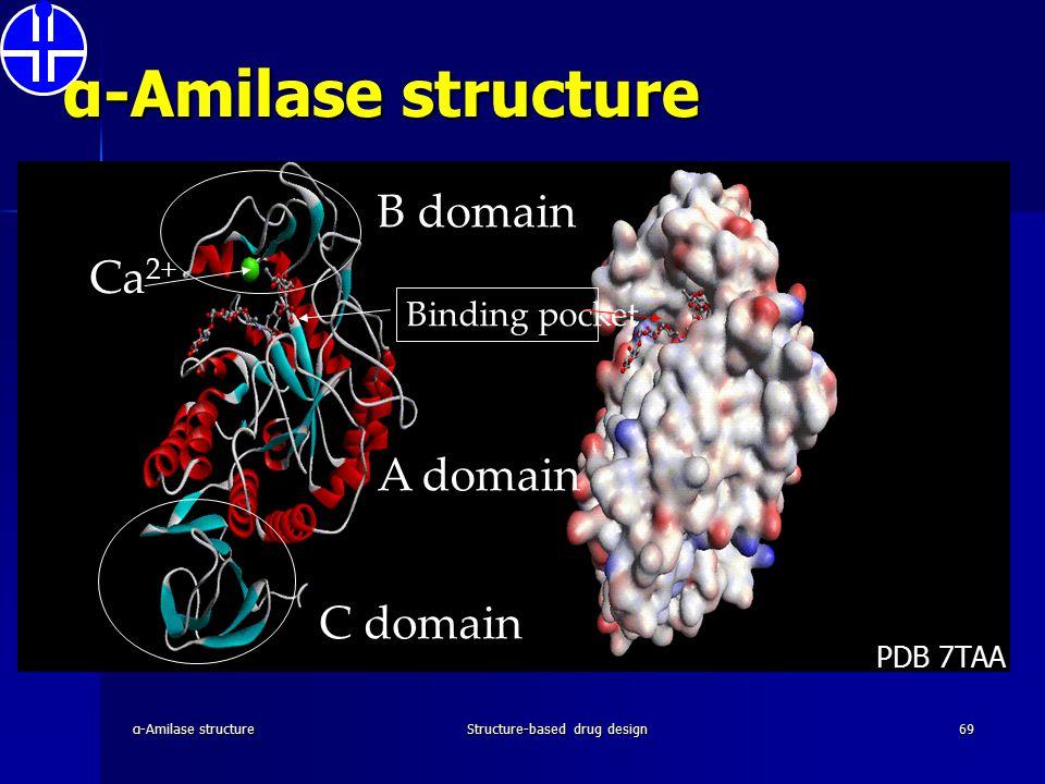 α-Amilase structureStructure-based drug design69 A domain C domain B domain Binding pocket Ca 2+ α-Amilase structure PDB 7TAA