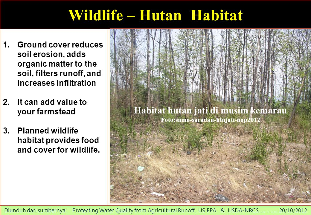 Wildlife – Hutan Habitat 1.Ground cover reduces soil erosion, adds organic matter to the soil, filters runoff, and increases infiltration 2.It can add