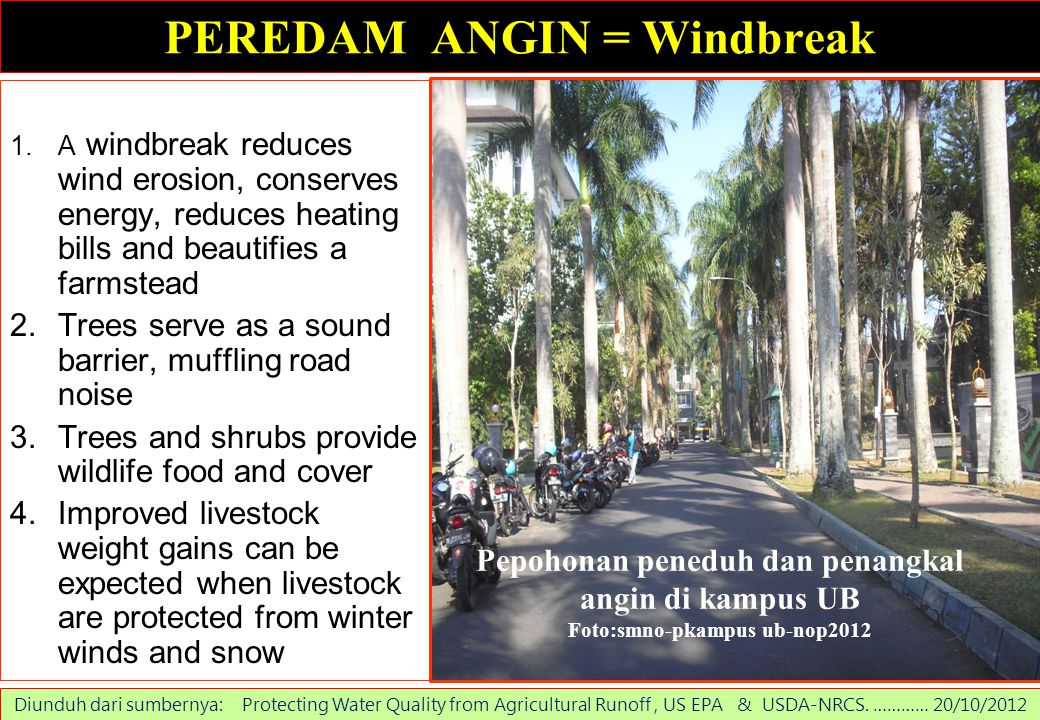 PEREDAM ANGIN = Windbreak 1.A windbreak reduces wind erosion, conserves energy, reduces heating bills and beautifies a farmstead 2.Trees serve as a so