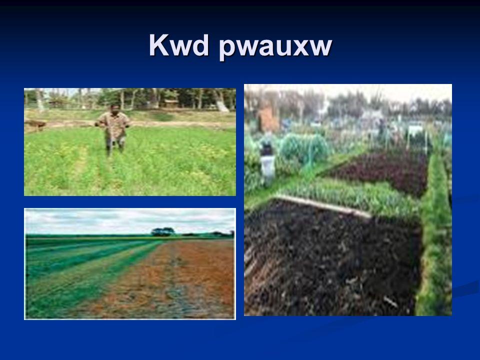 Kwd pwauxw