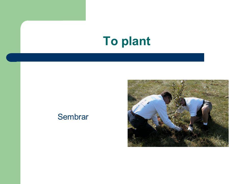 To plant Sembrar