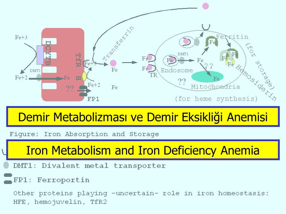Iron Metabolism and Iron Deficiency Anemia Demir Metabolizması ve Demir Eksikliği Anemisi