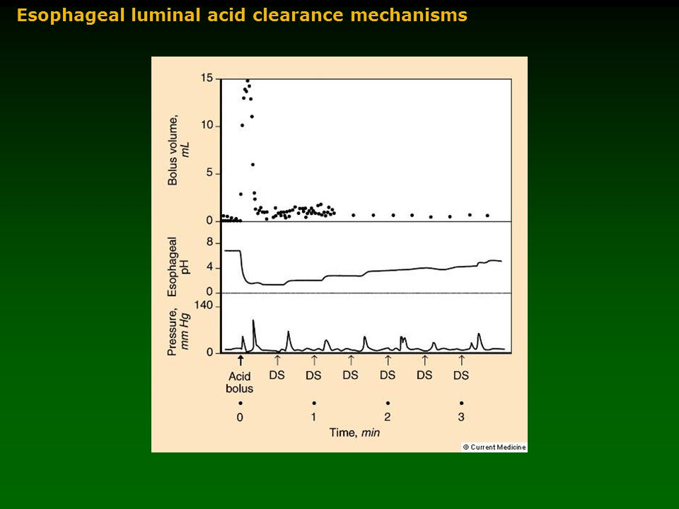 Esophageal luminal acid clearance mechanisms