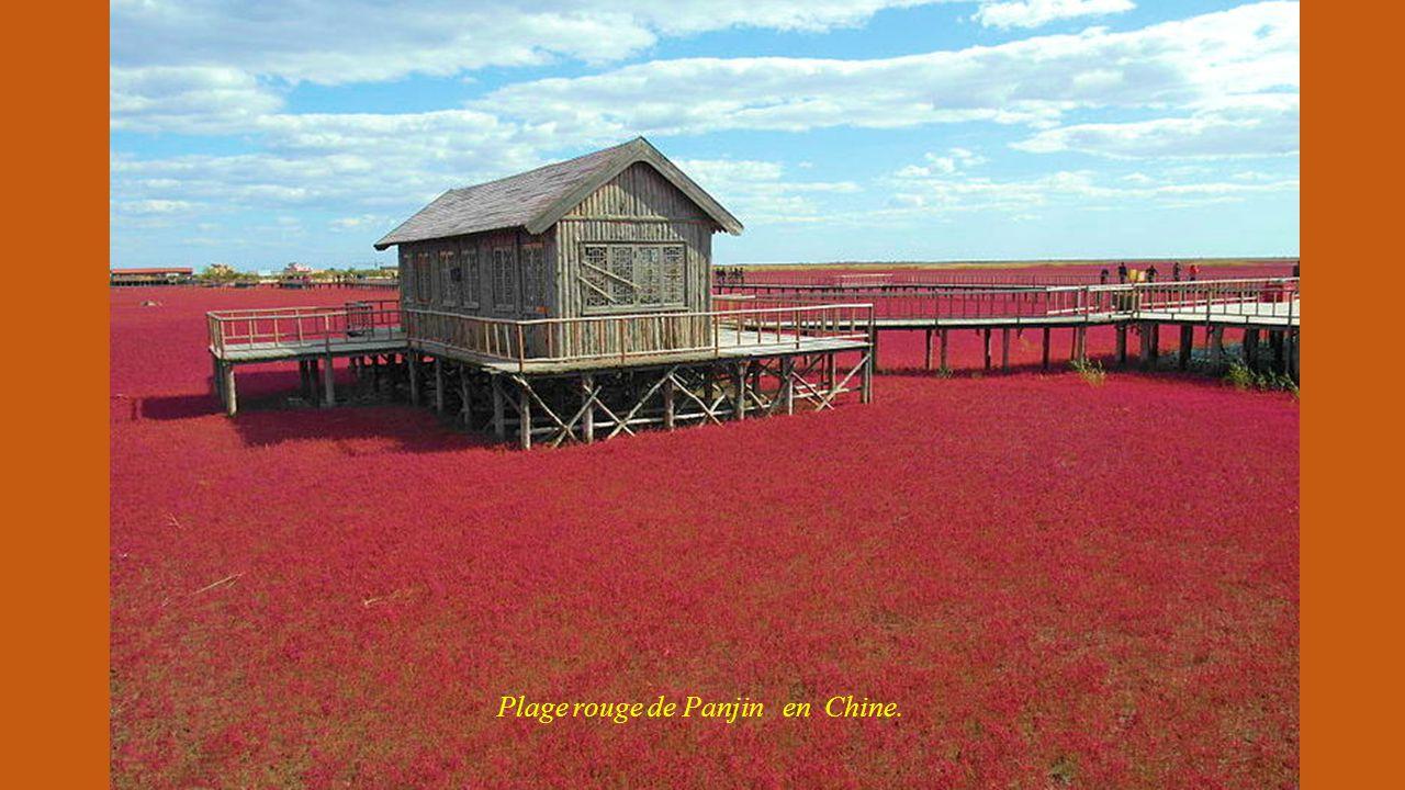 Plantations de Colza à Luoping (Chine)