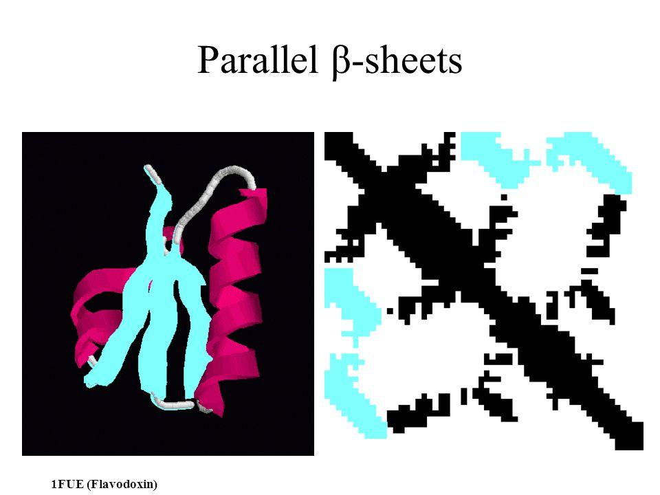 Parallel β-sheets 1FUE (Flavodoxin)