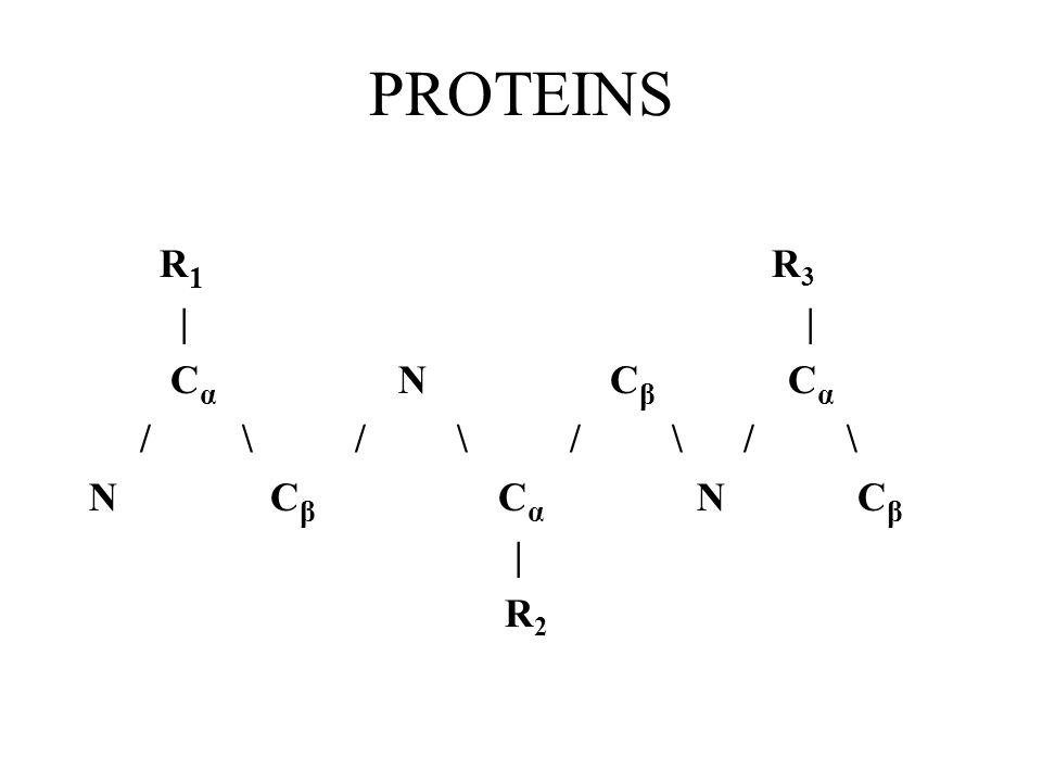 PROTEINS R 1 R 3 | | C α N C β C α / \ / \ / \ / \ N C β C α N C β | R 2
