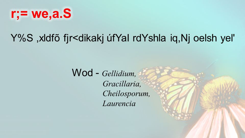 Y%S,xldfõ fjr<dikakj úfYaI rdYshla iq,Nj oelsh yel Wod - Gellidium, Gracillaria, Cheilosporum, Laurencia