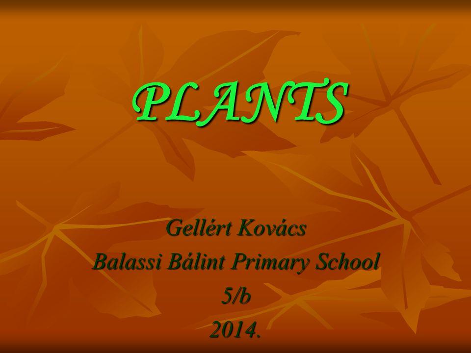 PLANTS Gellért Kovács Balassi Bálint Primary School 5/b2014.