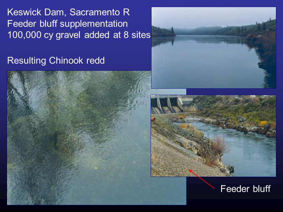 Keswick Dam, Sacramento R Feeder bluff supplementation 100,000 cy gravel added at 8 sites Feeder bluff Resulting Chinook redd