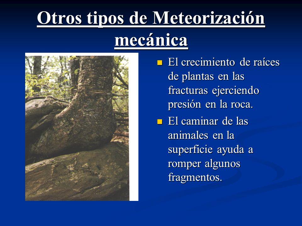 Otros tipos de Meteorización mecánica El crecimiento de raíces de plantas en las fracturas ejerciendo presión en la roca.