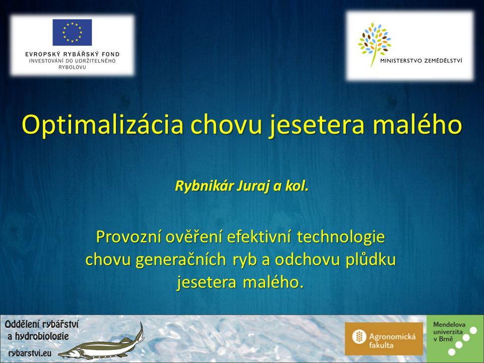 Optimalizácia chovu jesetera malého Provozní ověření efektivní technologie chovu generačních ryb a odchovu plůdku jesetera malého.