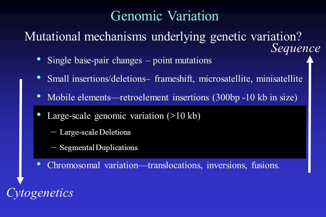 Global Analysis of Segmental Duplications Approaches: Computational a) Whole genome assembly comparison b) Whole genome shotgun sequence detection strategies Experimental Comparative sequence analysis, array comparative genomic hybridization, comparative FISH Interchromosomal Intrachromosomal Segmental Duplications Question: What is the organization, mechanism and impact of recent human segmental duplications.