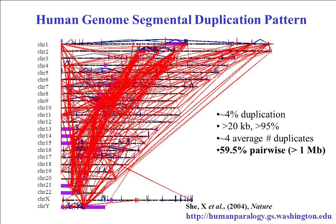 Human Genome Segmental Duplication Pattern chr1 chr2 chr3 chr4 chr5 chr6 chr7 chr8 chr9 chr10 chr11 chr12 chr13 chr14 chr15 chr16 chr17 chr18 chr19 chr20 chr21 chr22 chrX chrY ~4% duplication >20 kb, >95% ~4 average # duplicates 59.5% pairwise (> 1 Mb) http://humanparalogy.gs.washington.edu She, X et al., (2004), Nature