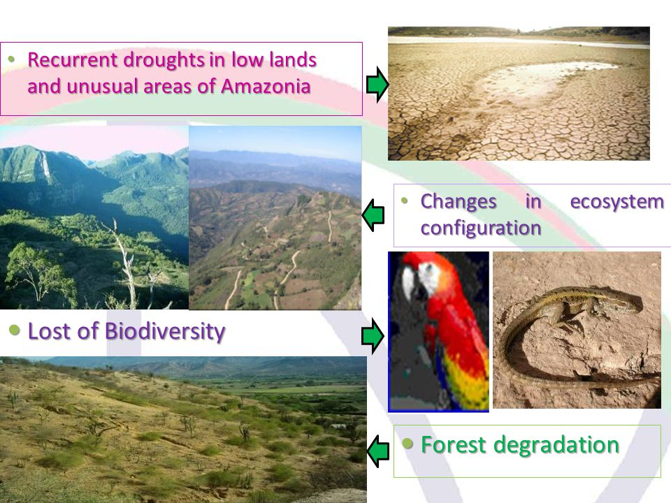 Changes in ecosystem configuration Changes in ecosystem configuration Recurrent droughts in low lands and unusual areas of Amazonia Recurrent droughts in low lands and unusual areas of Amazonia Lost of Biodiversity Lost of Biodiversity Forest degradation Forest degradation