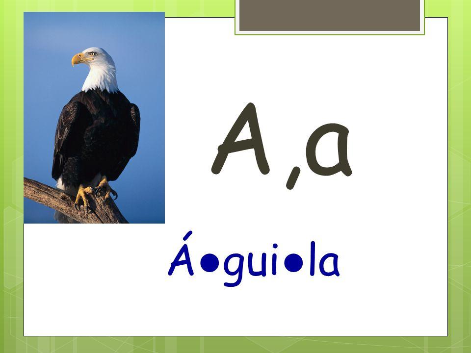 A,a Á ● gui ● la