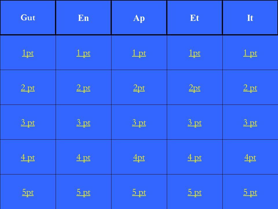 2 pt 3 pt 4 pt 5pt 1 pt 2 pt 3 pt 4 pt 5 pt 1 pt 2pt 3 pt 4pt 5 pt 1pt 2pt 3 pt 4 pt 5 pt 1 pt 2 pt 3 pt 4pt 5 pt 1pt Gut EnApEtIt