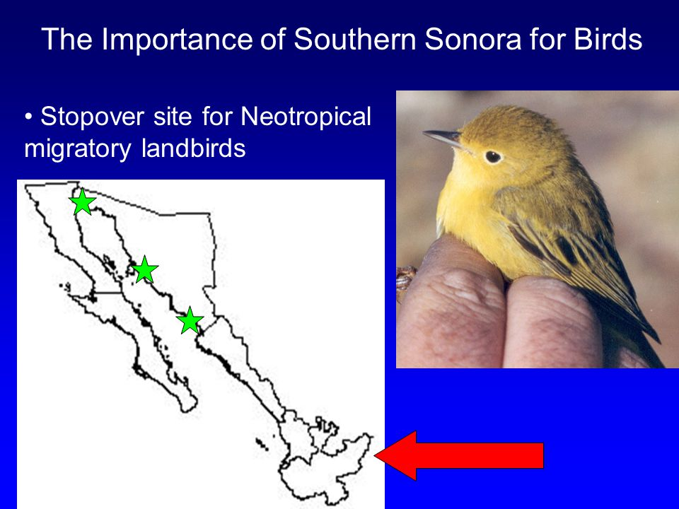 The Importance of Southern Sonora for Birds Stopover site for Neotropical migratory landbirds