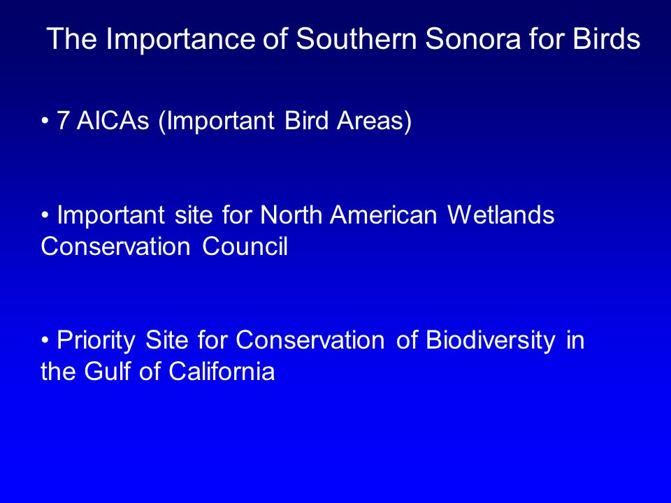 The Importance of Southern Sonora for Birds 7 AICAs (Important Bird Areas) Important site for North American Wetlands Conservation Council Priority Site for Conservation of Biodiversity in the Gulf of California
