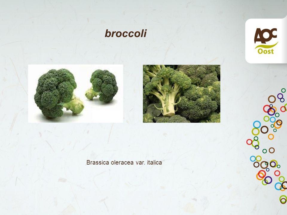 broccoli Brassica oleracea var. italica