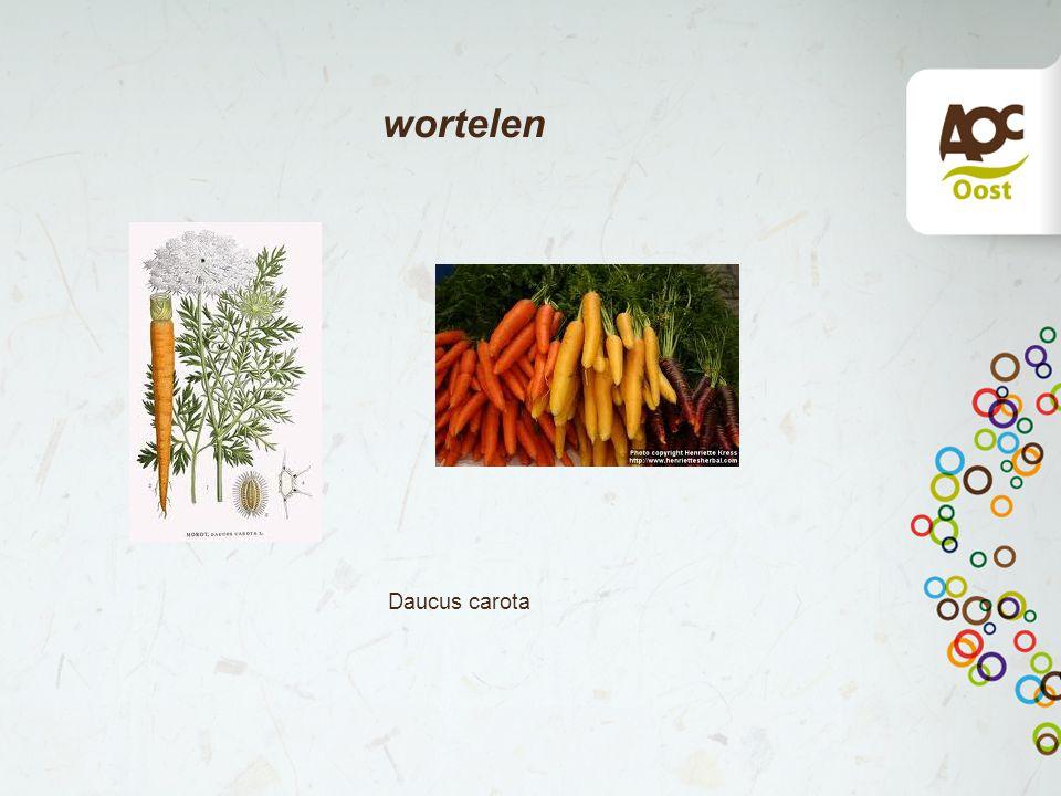 wortelen Daucus carota