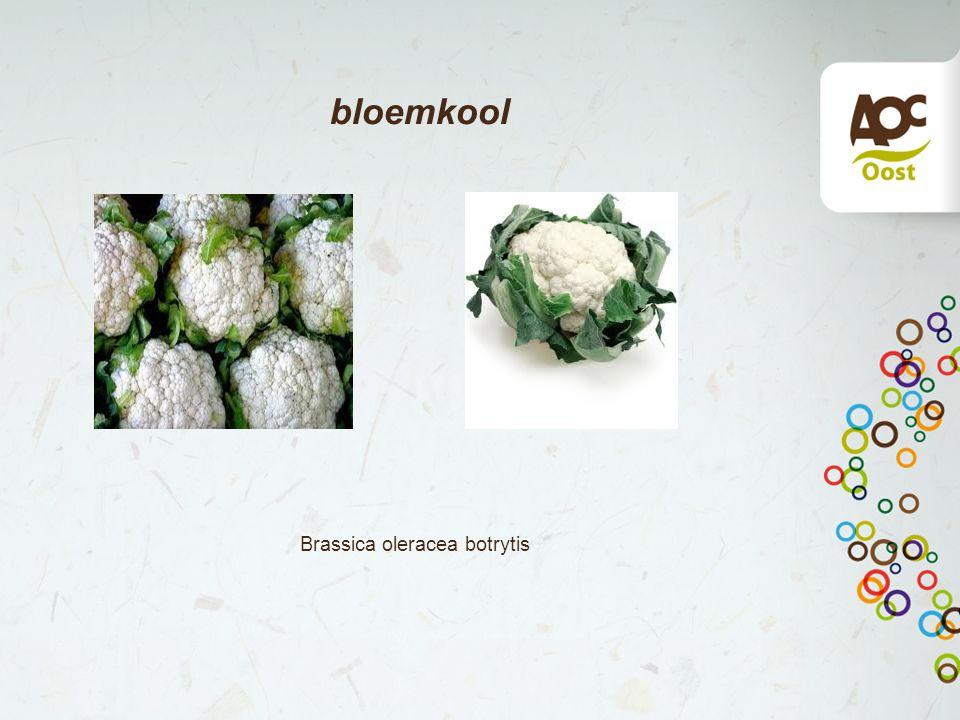 bloemkool Brassica oleracea botrytis