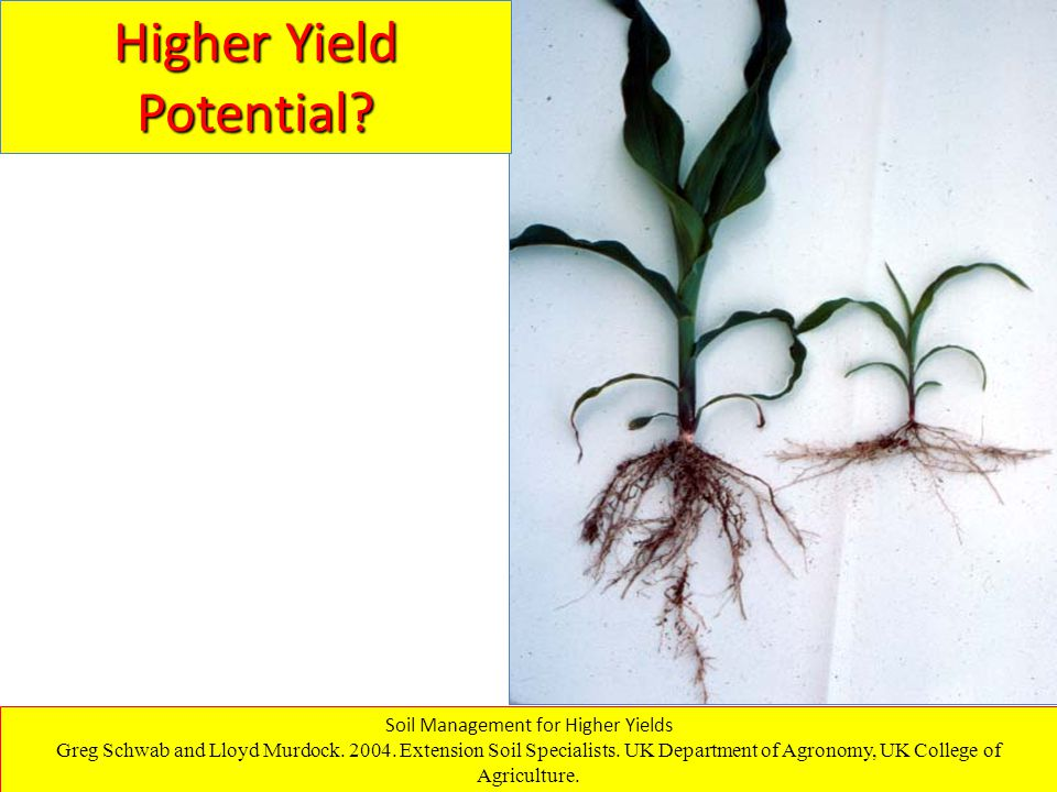 Higher Yield Potential. Soil Management for Higher Yields Greg Schwab and Lloyd Murdock.