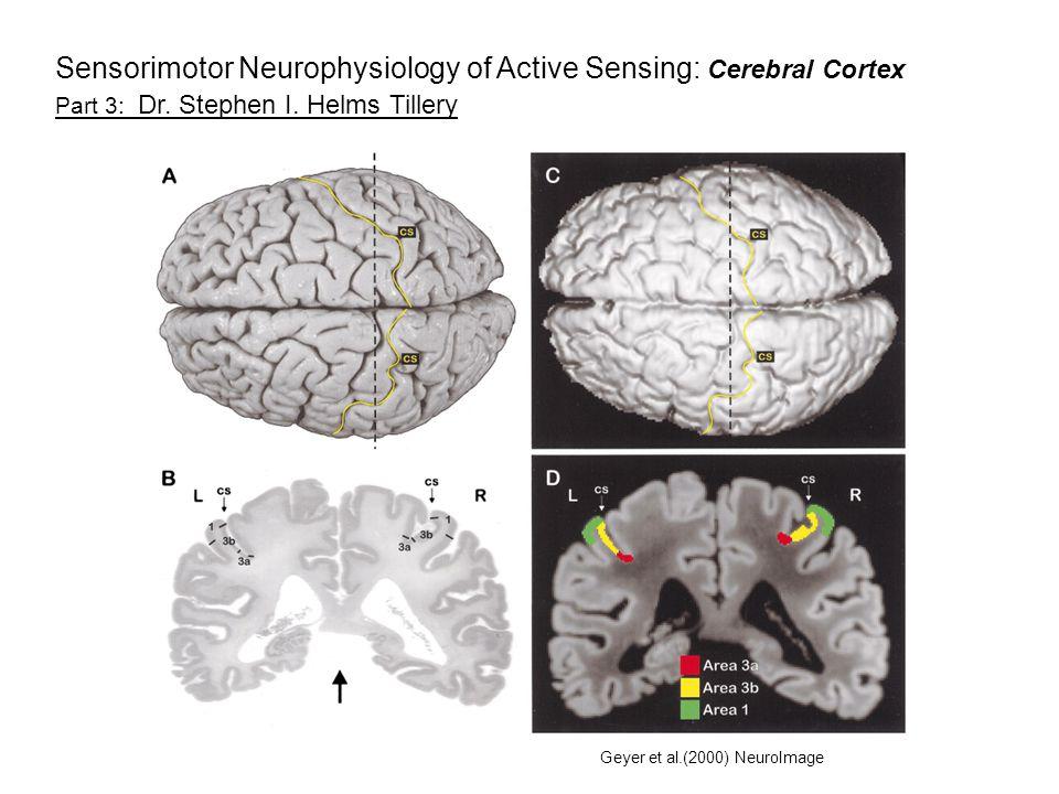 Geyer et al.(2000) NeuroImage Part 3: Dr. Stephen I.
