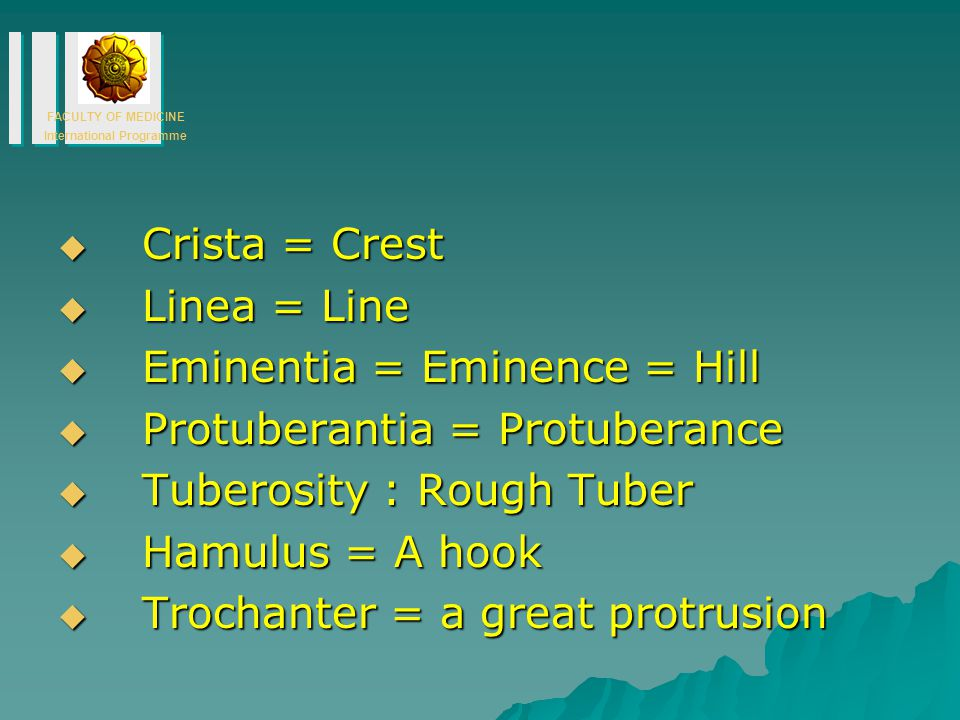 FACULTY OF MEDICINE International Programme  Crista = Crest  Linea = Line  Eminentia = Eminence = Hill  Protuberantia = Protuberance  Tuberosity : Rough Tuber  Hamulus = A hook  Trochanter = a great protrusion