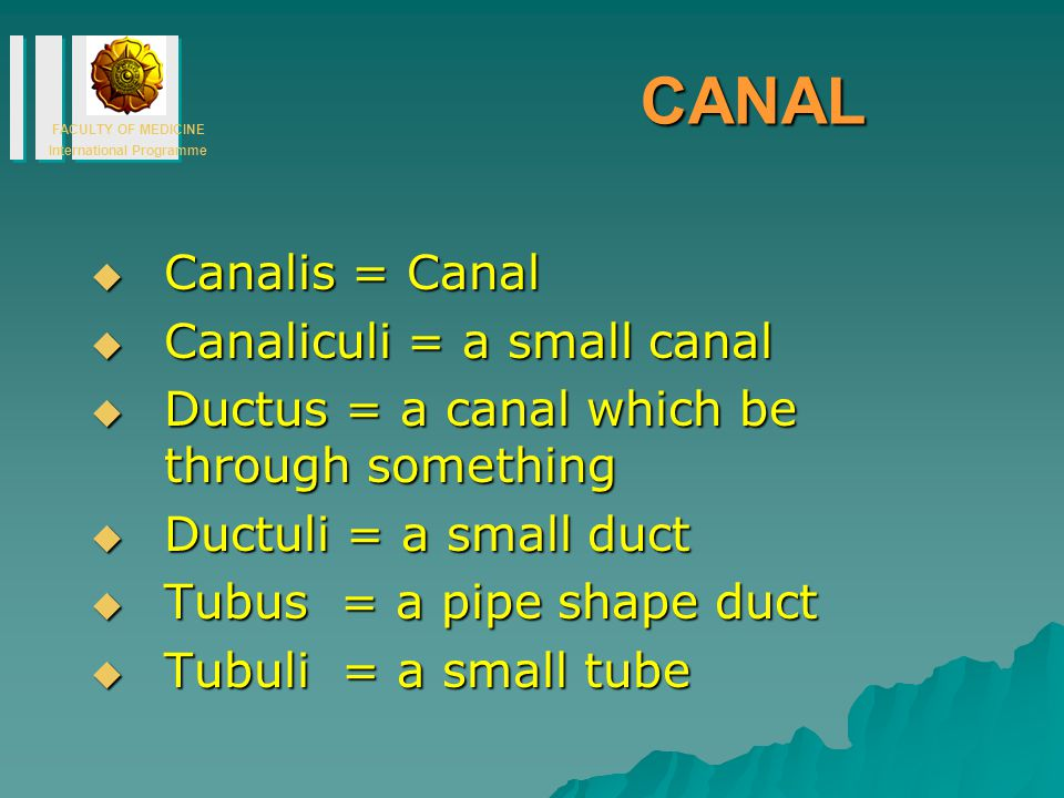 FACULTY OF MEDICINE International Programme CANAL  Canalis = Canal  Canaliculi = a small canal  Ductus = a canal which be through something  Ductuli = a small duct  Tubus = a pipe shape duct  Tubuli = a small tube