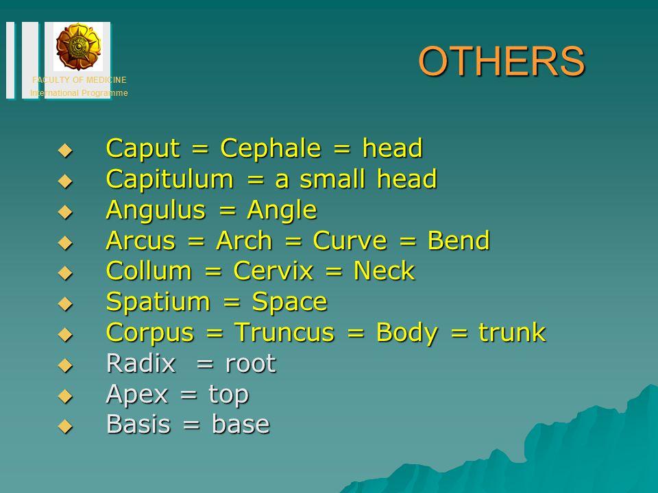 FACULTY OF MEDICINE International Programme OTHERS  Caput = Cephale = head  Capitulum = a small head  Angulus = Angle  Arcus = Arch = Curve = Bend  Collum = Cervix = Neck  Spatium = Space  Corpus = Truncus = Body = trunk  Radix = root  Apex = top  Basis = base