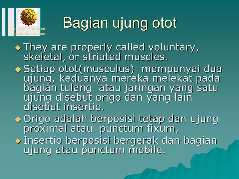 FACULTY OF MEDICINE International Programme Bagian ujung otot  They are properly called voluntary, skeletal, or striated muscles.