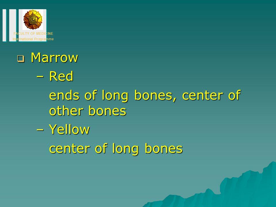 FACULTY OF MEDICINE International Programme  Marrow –Red ends of long bones, center of other bones –Yellow center of long bones