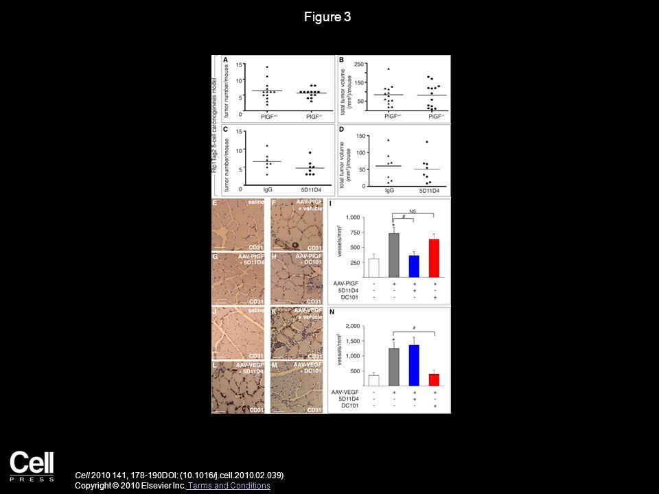 Figure 3 Cell 2010 141, 178-190DOI: (10.1016/j.cell.2010.02.039) Copyright © 2010 Elsevier Inc.